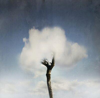 Fototapeta Drzewo w chmurze