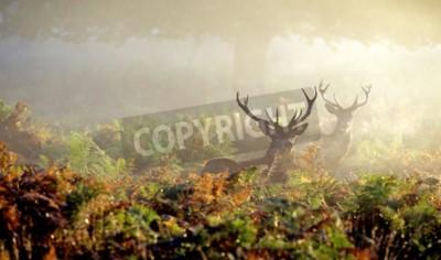 Fototapeta Du? E czerwone jelenie stag w jesiennej mgle