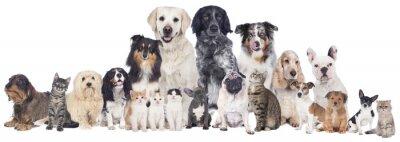 Fototapeta Duża grupa psy i koty