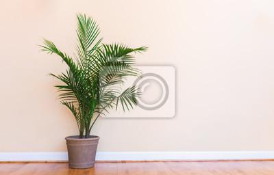 Fototapeta Duża wewnętrzna roślina palmowa w jasnożółtym pomieszczeniu