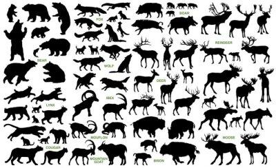 Fototapeta Duże ssaki z ziem północnych sylwetki wektora kolekcji