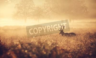 Fototapeta Duży jelenia sylwetka w jesiennej mgle