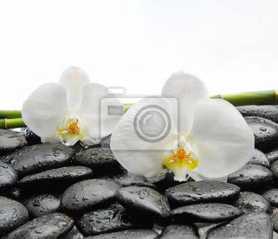 Dwa Biała orchidea kwiat z czarnymi kamieniami, gaj na mokrych tle