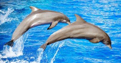 Fototapeta Dwa delfiny skoki w błękitne morze.