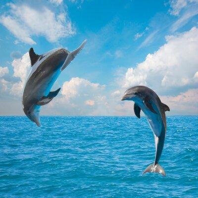 Fototapeta dwa delfiny skoków