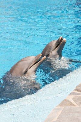 Fototapeta Dwa delfiny w wodzie uśmiechem