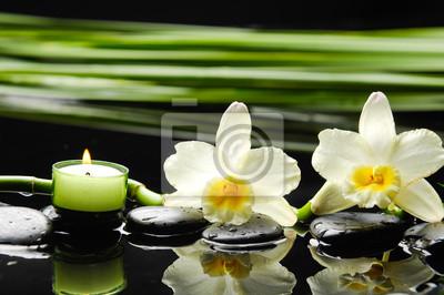 Dwa kamienie i Orchidea z zielonym liściem na mokrej tle