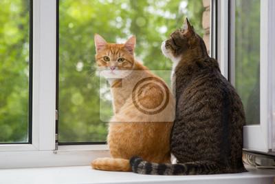 Fototapeta Dwa kot siedzi na parapecie