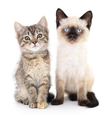 Fototapeta Dwa małe kocięta