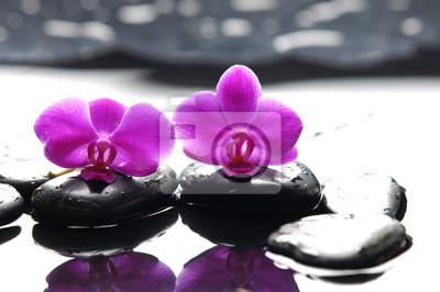 Dwa orchidea i czarny kamień z odbiciem