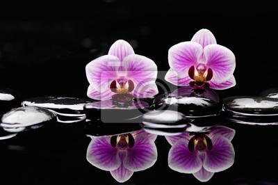 Dwa orchidea na czarnym kamienia odbiciu