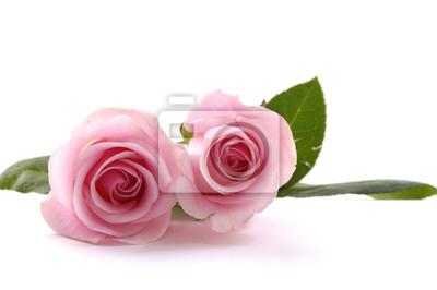 Dwa piękne różowe róże