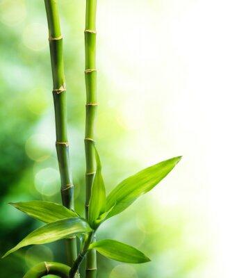Fototapeta dwie łodygi bambusa i światła mijania