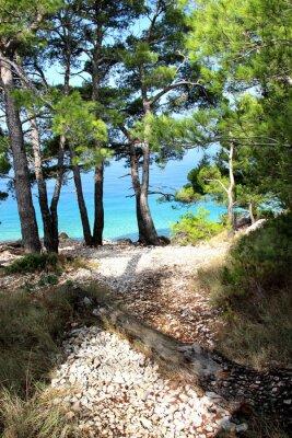 Fototapeta Dzika przyroda i piękne morze w Chorwacji