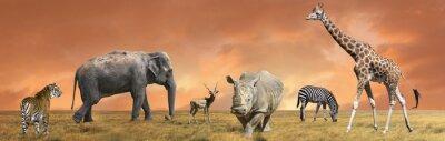 Fototapeta Dziki gromadzenia zwierząt sawanny
