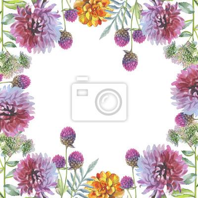 Dziki kwiat chryzantemy ramka w stylu akwarela izolowane. Pełna nazwa tego zioła: chryzantema, dalia. Aquarelle kwiaty mogą być wykorzystane do tła, tekstury, wzór, ramki lub obramowanie.