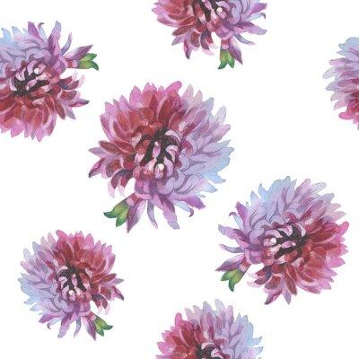 Dziki kwiat chryzantemy wzór w stylu akwareli. Pełna nazwa tego zioła: chryzantema, dalia. Aquarelle kwiaty mogą być wykorzystane do tła, tekstury, wzór, ramki lub obramowanie.