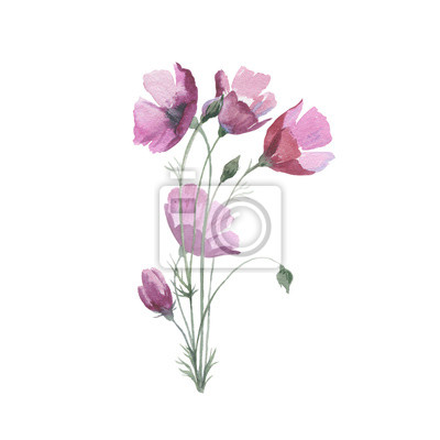 Dziki kwiat maku w stylu akwarela izolowane. Pełna nazwa tego zioła: Papaver, mak, mak. Aquarelle kwiaty mogą być wykorzystane do tła, tekstury, wzór, ramki lub obramowanie.