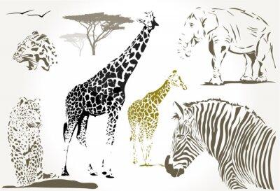 Fototapeta dzikie afrykańskie zwierzęta żyrafa, jaguar zebra, słoń