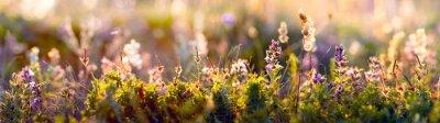 Fototapeta dzikie kwiaty i zbliżenie trawy, poziome zdjęcie panoramy