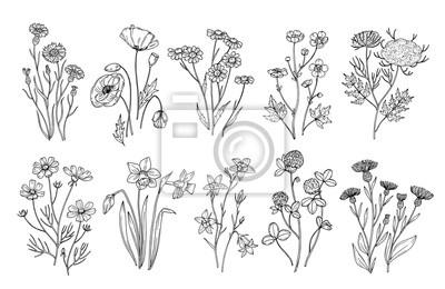 Fototapeta Dzikie kwiaty. Szkic kwiaty i zioła natura elementy botaniczne. Ręcznie rysowane lato pole kwitnienia wektor zestaw. Ilustracja kwiecisty pole, dzikiego kwiatu biała czarna linia