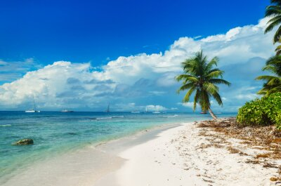 Fototapeta Dzikie nietknięte plaża na wyspie Saona