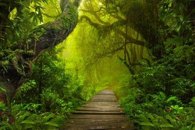 Fototapeta Dżungla azjatyckich lasów tropikalnych