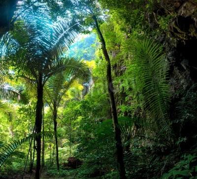 Fototapeta Dżungla Las