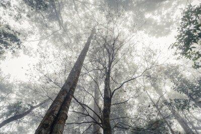 Fototapeta Dżungla we mgle