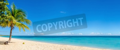 Fototapeta Egzotyczna plaża ze złotym piaskiem, palmy kokosowe i ciemnoniebieskie niebo, Karaiby