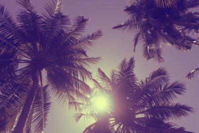 Fototapeta Egzotyczne letnie tropikalne palmy w tle