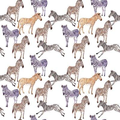 Fototapeta Egzotyczne zebra dzikich zwierz? T wzór w stylu akwarela. Pełna nazwa zwierzęcia: zebra. Aquarelle dzikich zwierząt na tle, tekstury, wzór opakowania lub tatuaż.