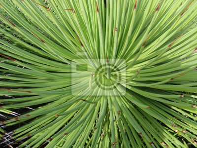 Fototapeta egzotycznych roślin