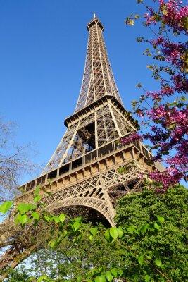 Fototapeta Eiffel Tower with spring tree in Paris, France