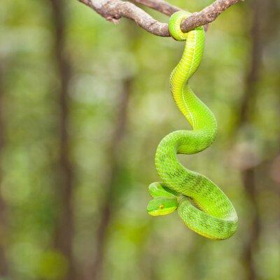 Ekiiwhagahmg węże węże zielony w lasach Tajlandii