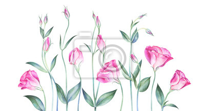 Elegant background with eustoma flowers. Watercolor hand drawn illustration.