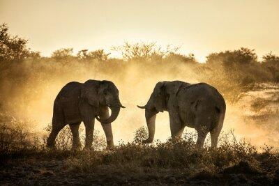 Fototapeta Elephant fight