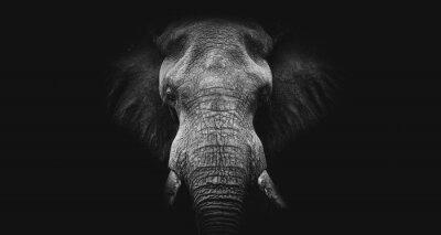 Fototapeta Elephant on black, fine art B&W