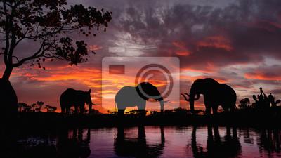 Fototapeta Elephants walking by the lake