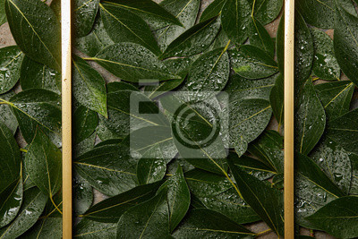 Fototapeta empty golden frame on green wet green foliage background with copy space