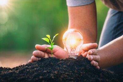 Fototapeta energy concept. eco power. hand protection lightbulb with small tree growing on soil