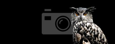 Fototapeta Eurasian eagle owl with a black background
