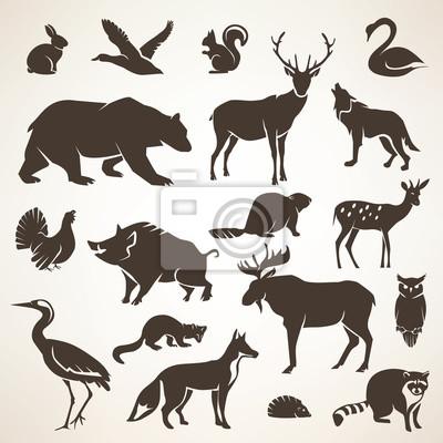 Fototapeta Europejski Forrest dzikie zwierzęta kolekcja stylizowane silh