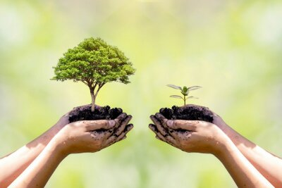 Fototapeta Exchange hand holding small tree with hand big tree environmental protection concept
