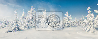 Fototapeta Fabulous winter panorama of mountain forest with snow covered fir trees. Colorful outdoor scene, Happy New Year celebration concept. Beauty of nature concept background.