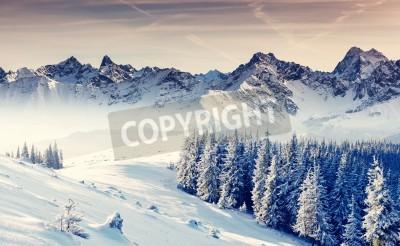 Fototapeta Fantastyczny zimowy krajobraz. Dramatyczne niebo zachmurzone. Twórczy kolażu. Piękno świata.