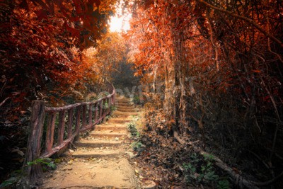 Fototapeta Fantasy las jesienią surrealistycznych barw. Ścieżka Droga droga przez gęstych drzew. Koncepcja krajobrazu na tajemniczej tle