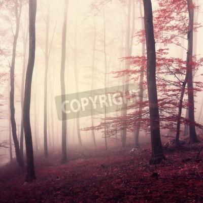 Fototapeta Fantasy marsala kolorowy mglisty las. Piękny kolor marshali w zamglonej forrest. Użyto koloru Marsali.