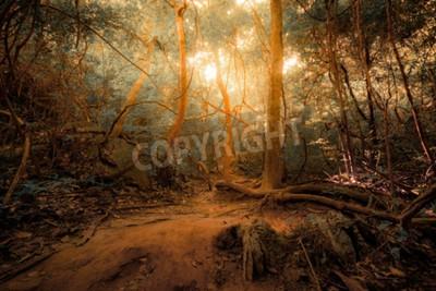 Fototapeta Fantasy tropikalnej dżungli lasów w surrealistycznych barw. Koncepcja krajobrazu na tajemniczej tle