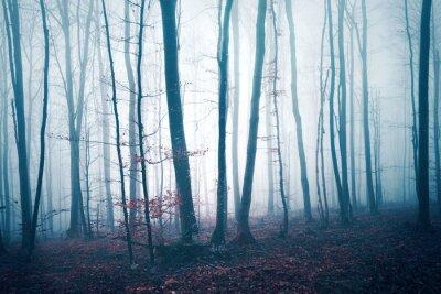 Fototapeta Fantazja zmrok - błękitny czerwień barwił mgłowego lasowego drzewa krajobraz. Zastosowano efekt filtra koloru.